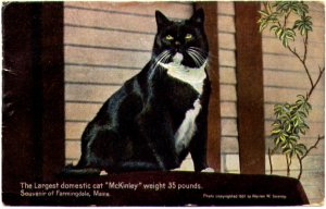 Largest Domestic Cat copy