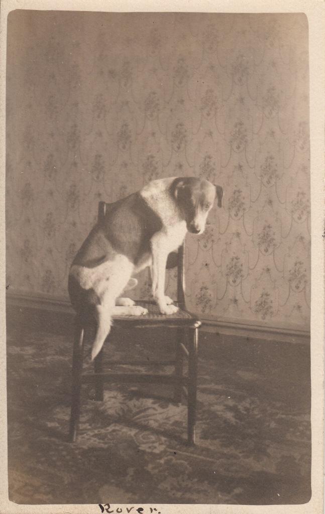 IMG pets blog_0017