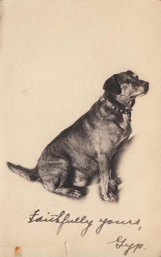"""Faithfully yours, Gyp.""  Real photo postcard, 1911, sent to Mrs. C. B. Watson, Ashland, Oregon.  Photographer unknown."