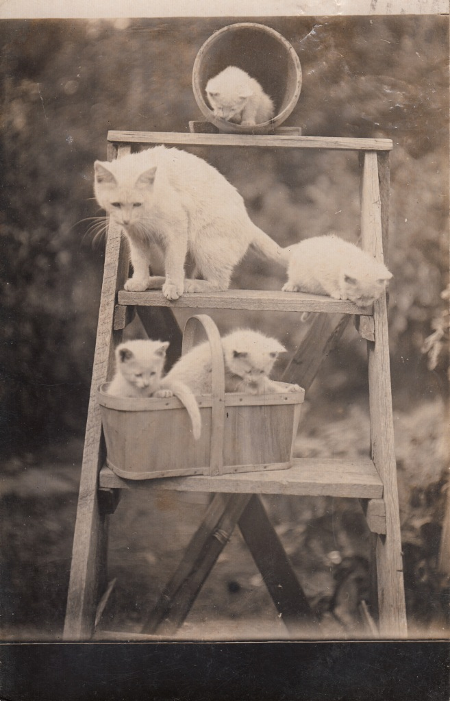 Cats step ladder pc 1907