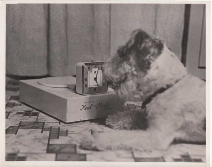 Kenl Mastr auto dog feeder