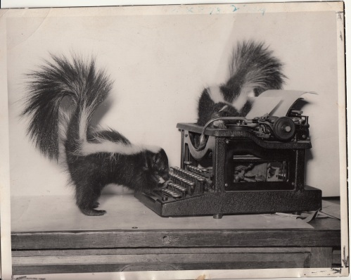 Skunks newspaper photo 1939