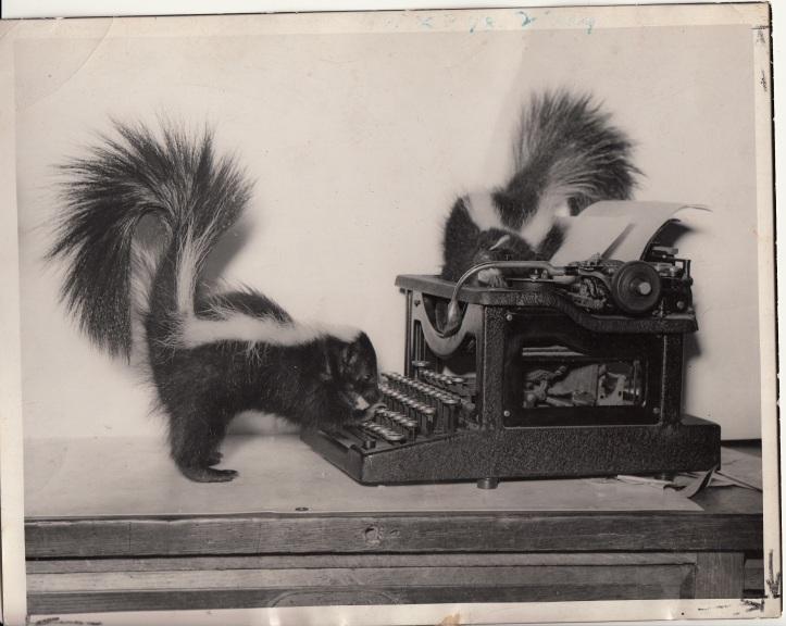 Skunks newspaper photo 1939