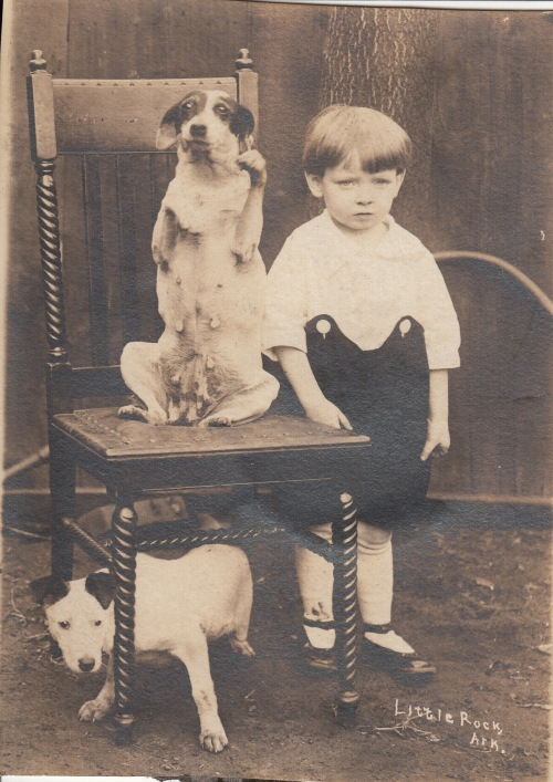 IMG pets blog_0040