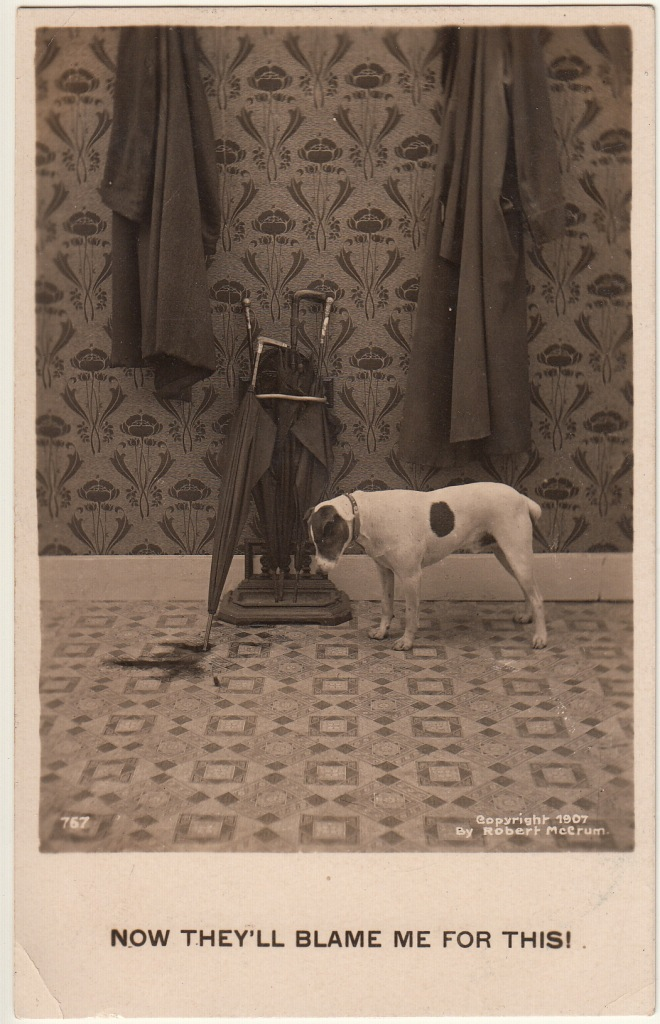 Pets Blog 1 July 15_0011 copy