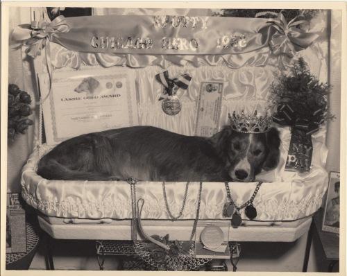 Pets Blog 1 July 15_0032