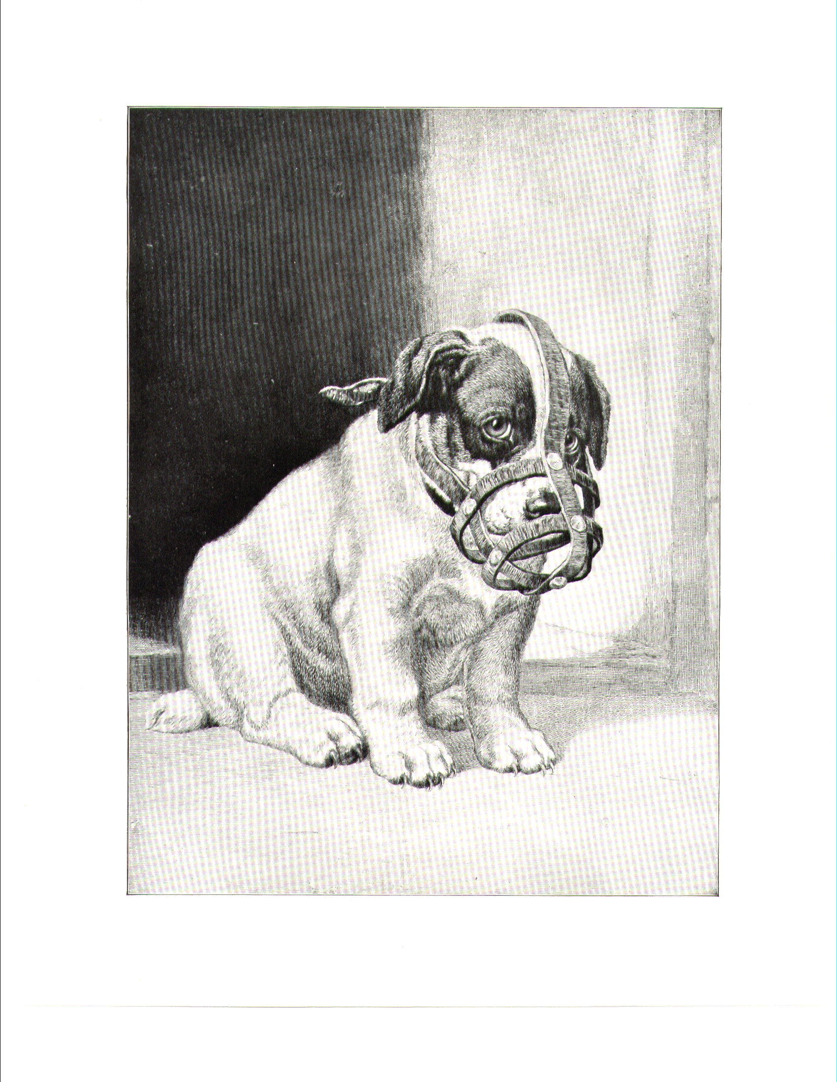 Dog Muzzles and City Dogs, 1900   The Pet Historian