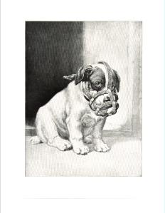 Dog in Muzzle