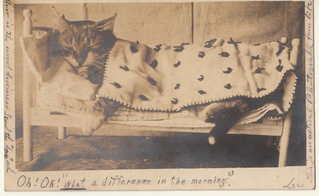 Cat in bed rppc
