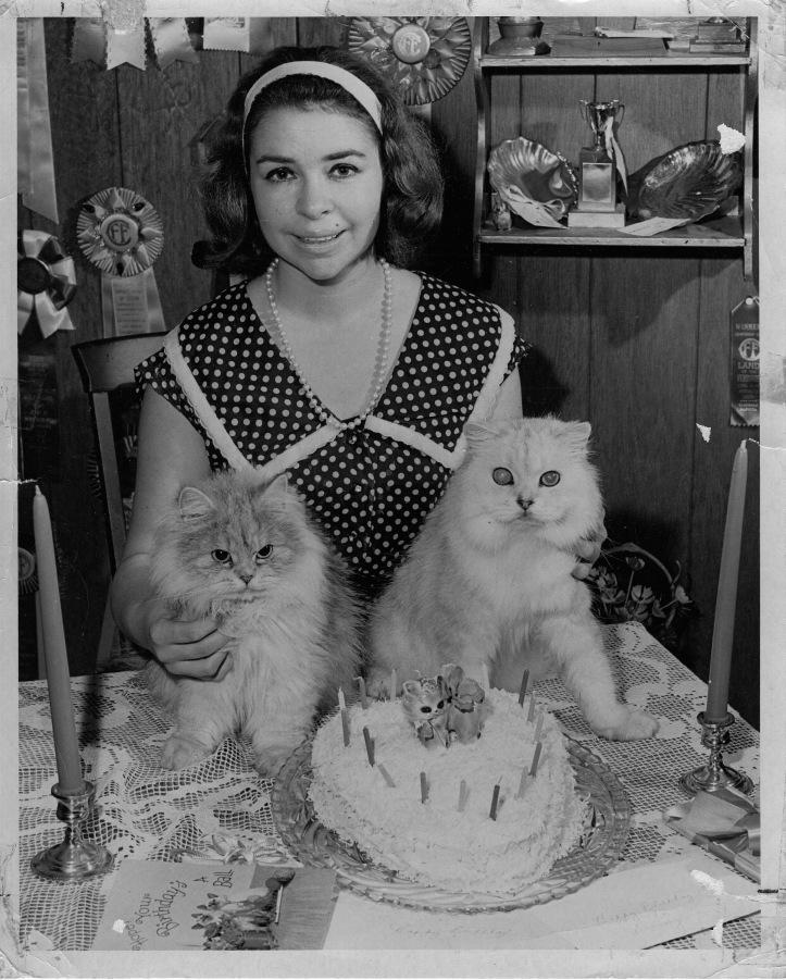 Persian cats birthday cake