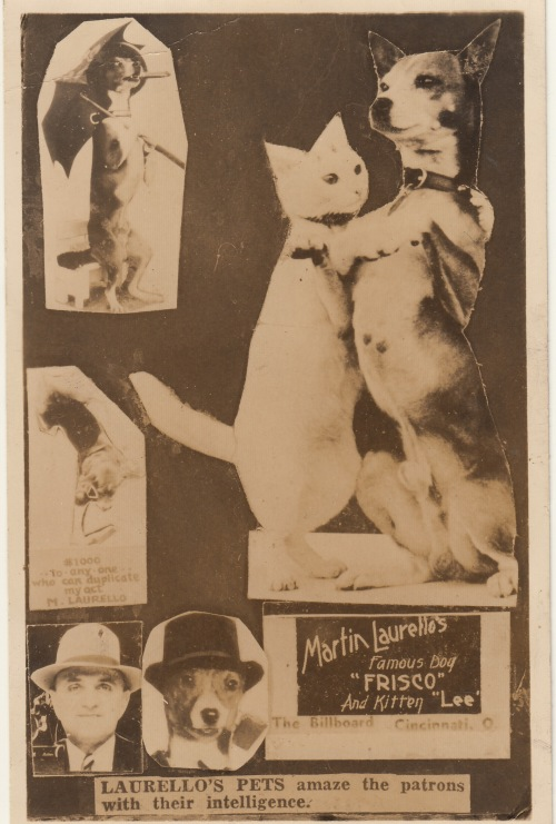 Laurello's Pets postcard