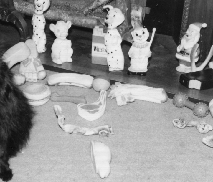 Pets Blog 9 January 2016_0017