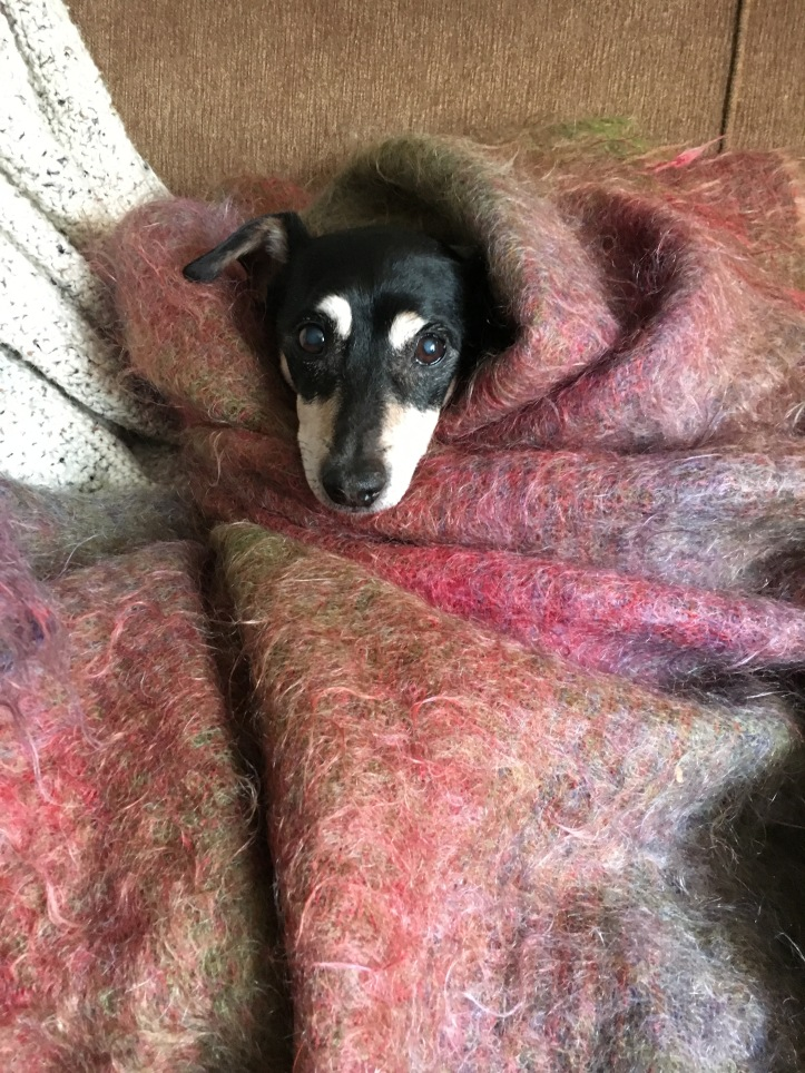 Stump in Pink Blankie