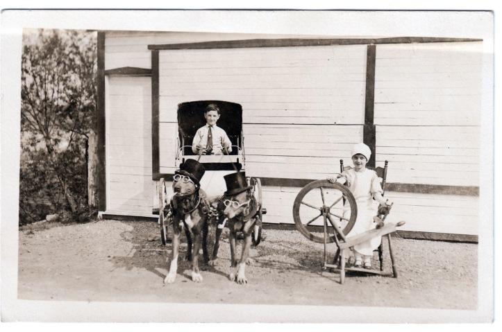 dogs pulling cart rppc Velox