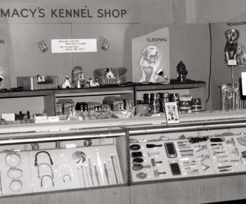 Macy's display Westminster 1953 1