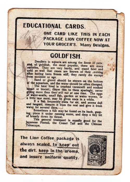 Goldfish Lion Coffee card back