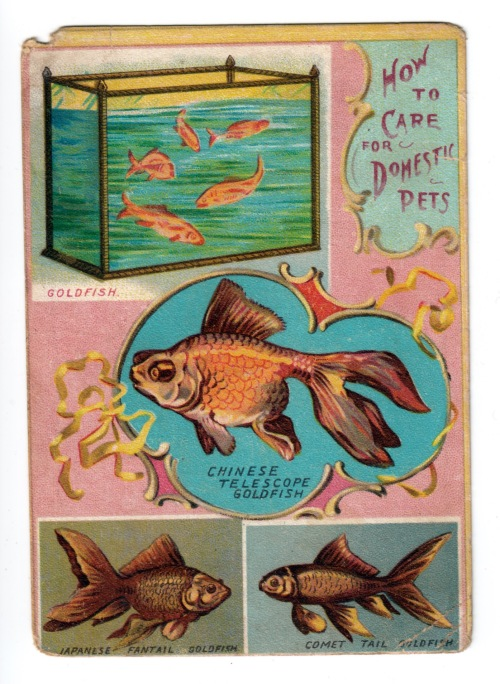 Goldfish Lion Coffee card front